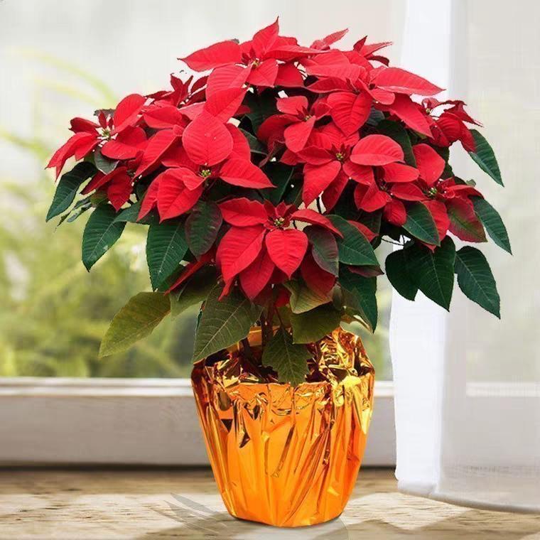 圣诞花盆栽3018A