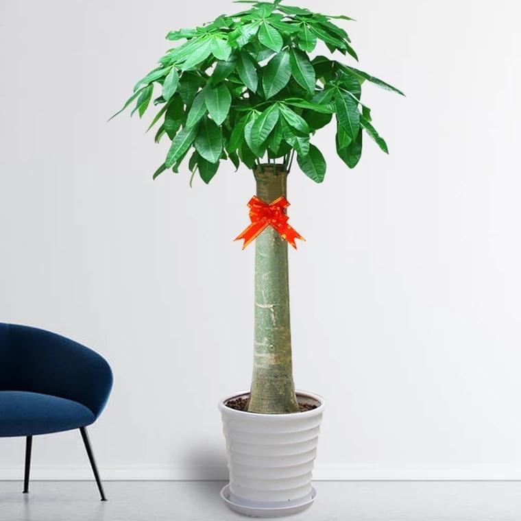 独杆发财树1017
