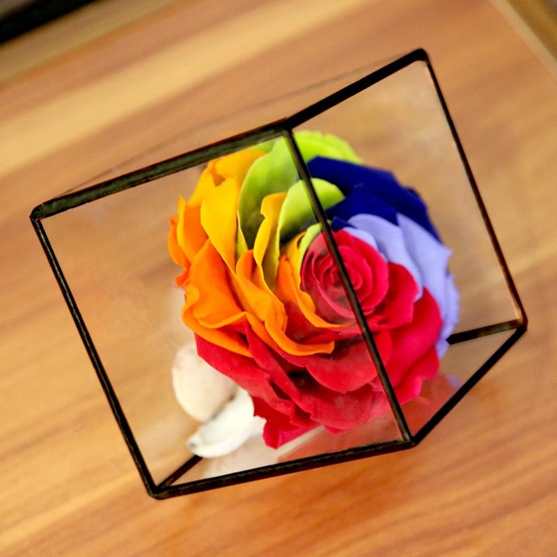 彩虹16009