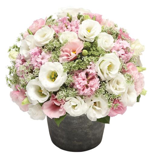 暖心系列|每周一束|每月4束|鲜花包月|精选花材|新用户赠送花瓶