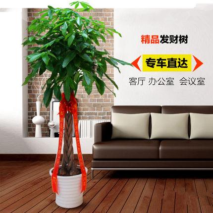 五编发财树1003