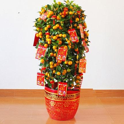 金桔金橘盆栽1028
