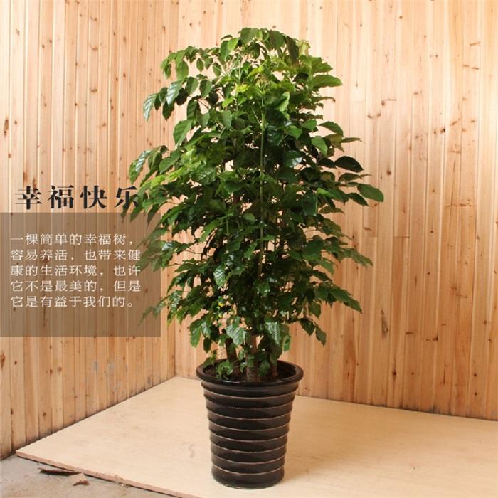 幸福树1002