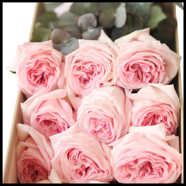 12朵 Super Rose-Pink Lover 厄瓜多尔玫瑰-粉色恋人